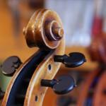 Celloschnecke
